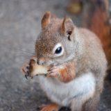 リスが何か食べている画像